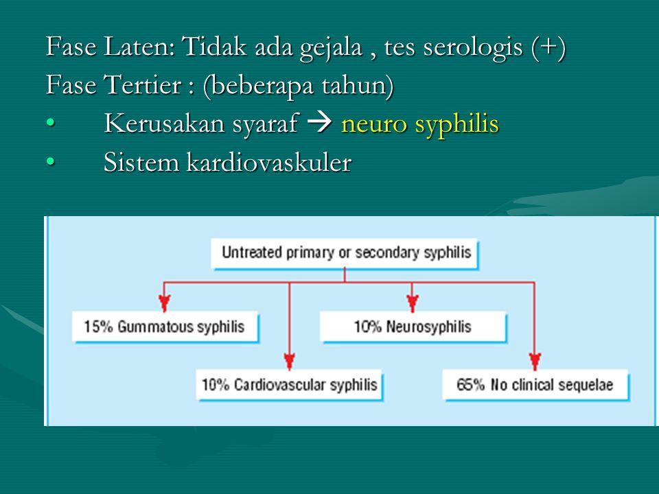 Fase Laten: Tidak ada gejala , tes serologis (+)