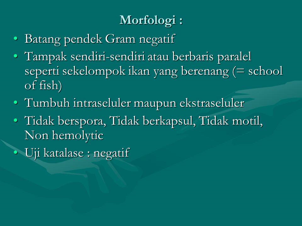Morfologi : Batang pendek Gram negatif. Tampak sendiri-sendiri atau berbaris paralel seperti sekelompok ikan yang berenang (= school of fish)