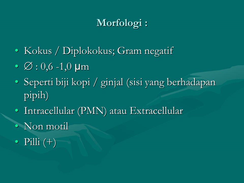 Morfologi : Kokus / Diplokokus; Gram negatif.  : 0,6 -1,0 µm. Seperti biji kopi / ginjal (sisi yang berhadapan pipih)