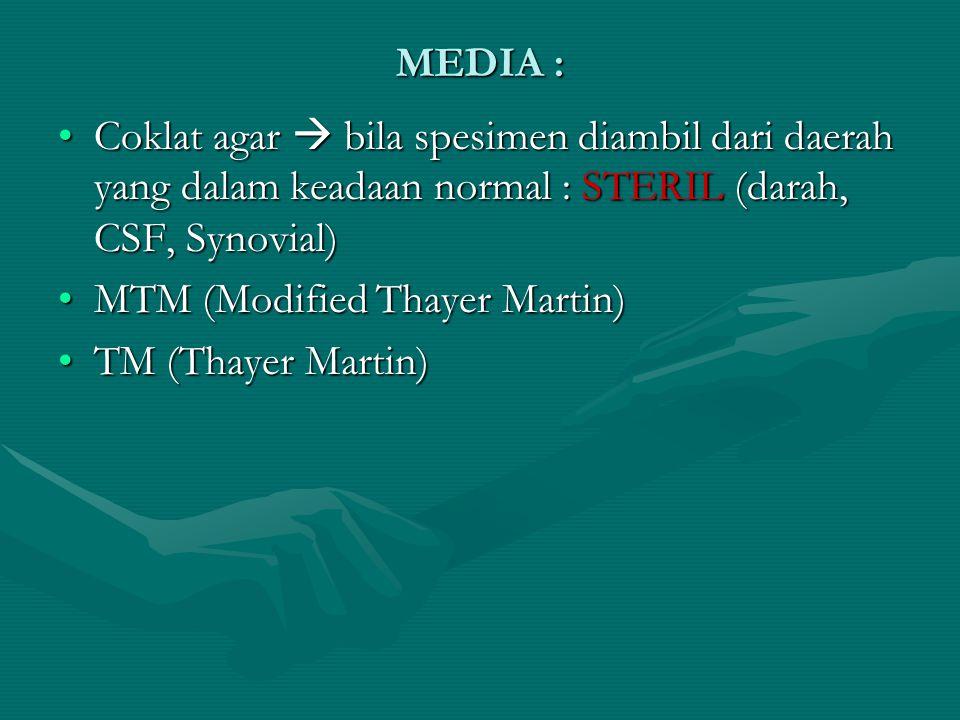 MEDIA : Coklat agar  bila spesimen diambil dari daerah yang dalam keadaan normal : STERIL (darah, CSF, Synovial)