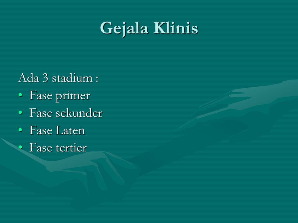 Gejala Klinis Ada 3 stadium : Fase primer Fase sekunder Fase Laten