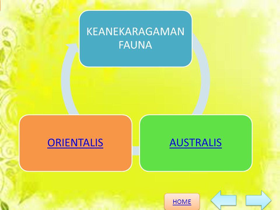 KEANEKARAGAMAN FAUNA AUSTRALIS ORIENTALIS