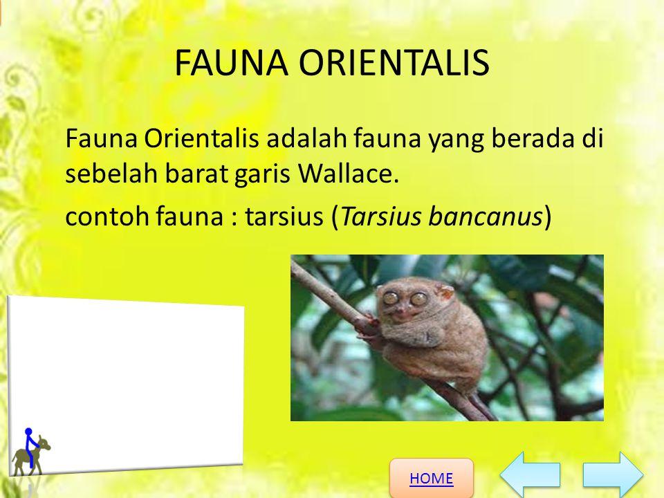 FAUNA ORIENTALIS Fauna Orientalis adalah fauna yang berada di sebelah barat garis Wallace.