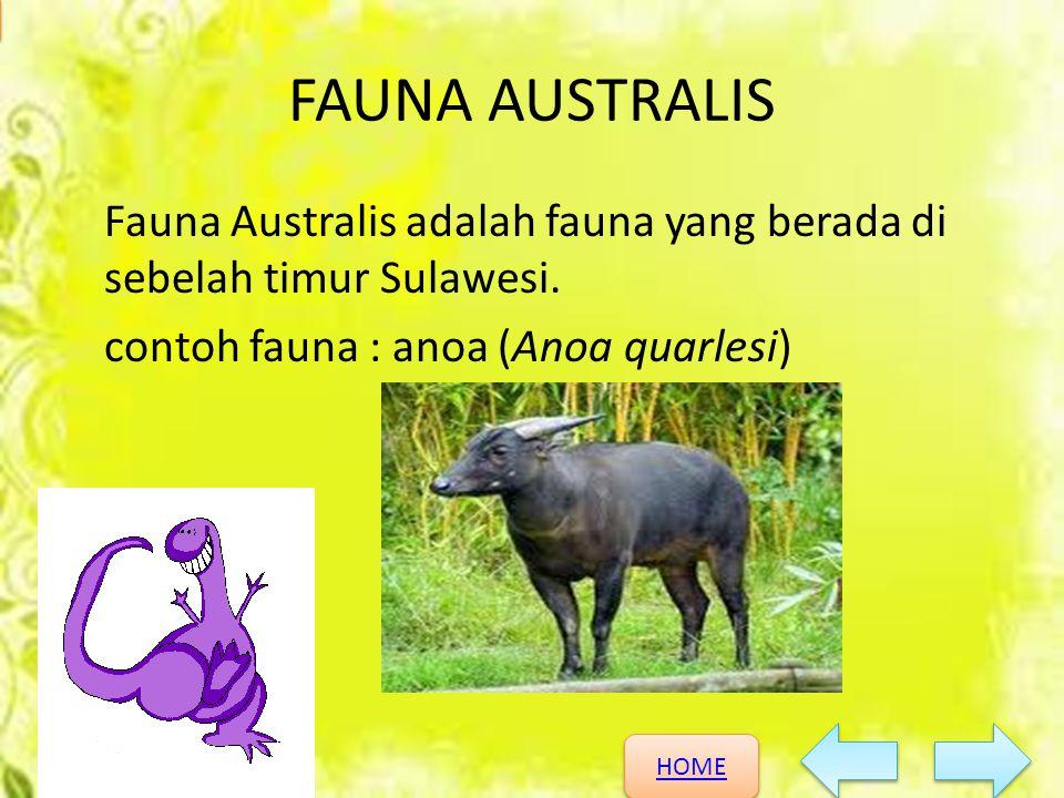 FAUNA AUSTRALIS Fauna Australis adalah fauna yang berada di sebelah timur Sulawesi.