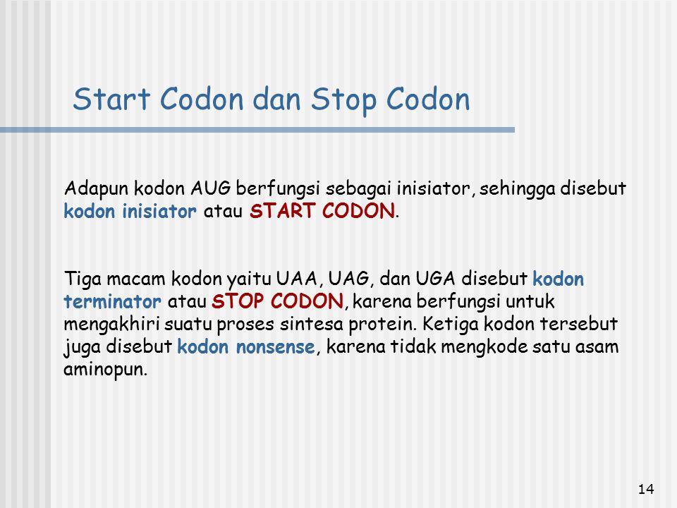 Start Codon dan Stop Codon