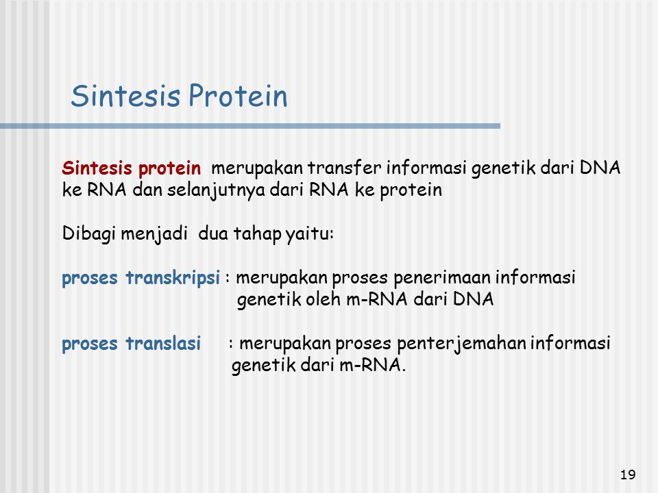 Sintesis Protein Sintesis protein merupakan transfer informasi genetik dari DNA ke RNA dan selanjutnya dari RNA ke protein.