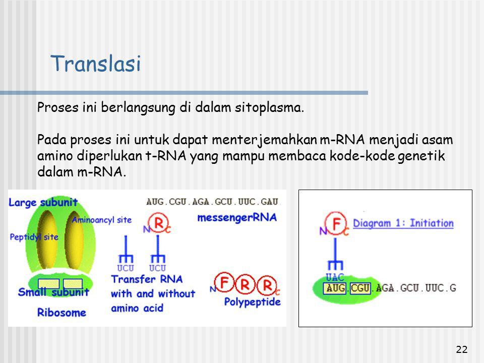 Translasi Proses ini berlangsung di dalam sitoplasma.