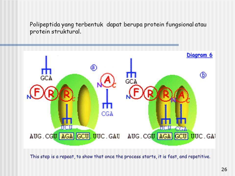 Polipeptida yang terbentuk dapat berupa protein fungsional atau protein struktural.