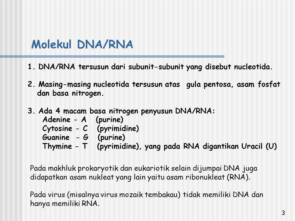 Molekul DNA/RNA 1. DNA/RNA tersusun dari subunit-subunit yang disebut nucleotida.
