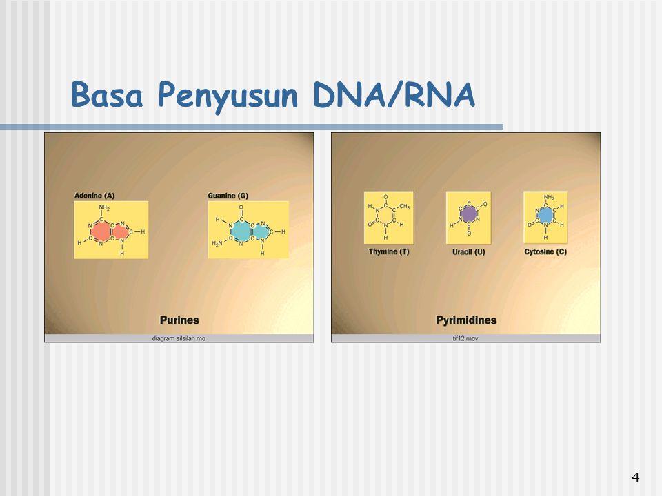Basa Penyusun DNA/RNA