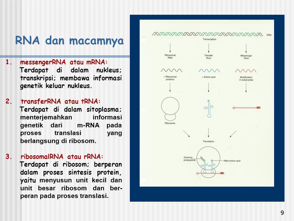 RNA dan macamnya messengerRNA atau mRNA: