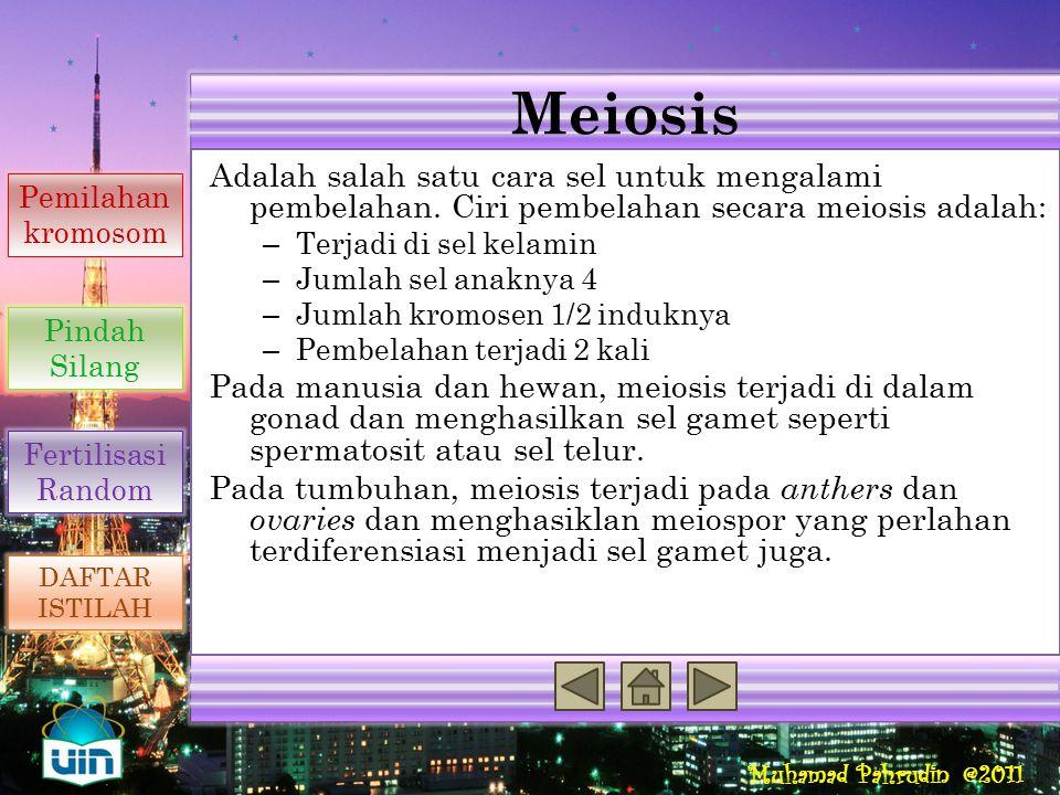 Meiosis Reproduksi Seksual Penyebab Variasi Genetik
