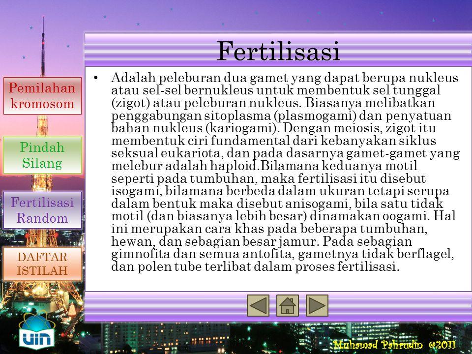 Fertilisasi Reproduksi Seksual Penyebab Variasi Genetik