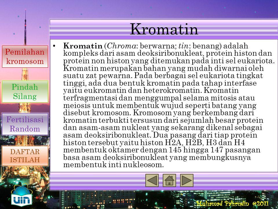 Kromatin Reproduksi Seksual Penyebab Variasi Genetik