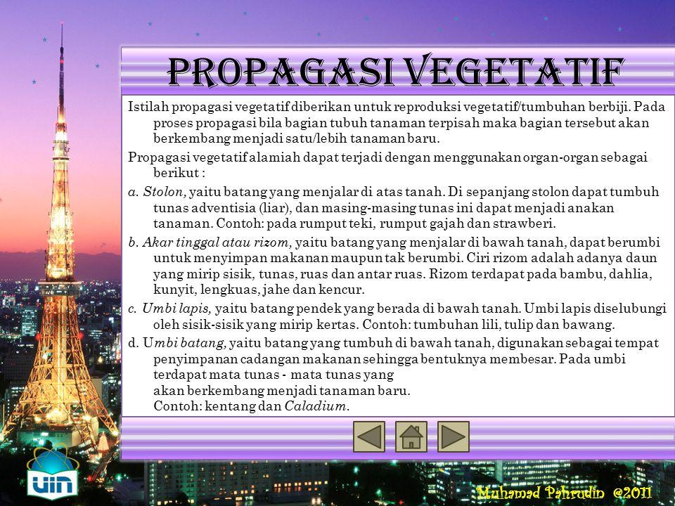 Propagasi vegetatif