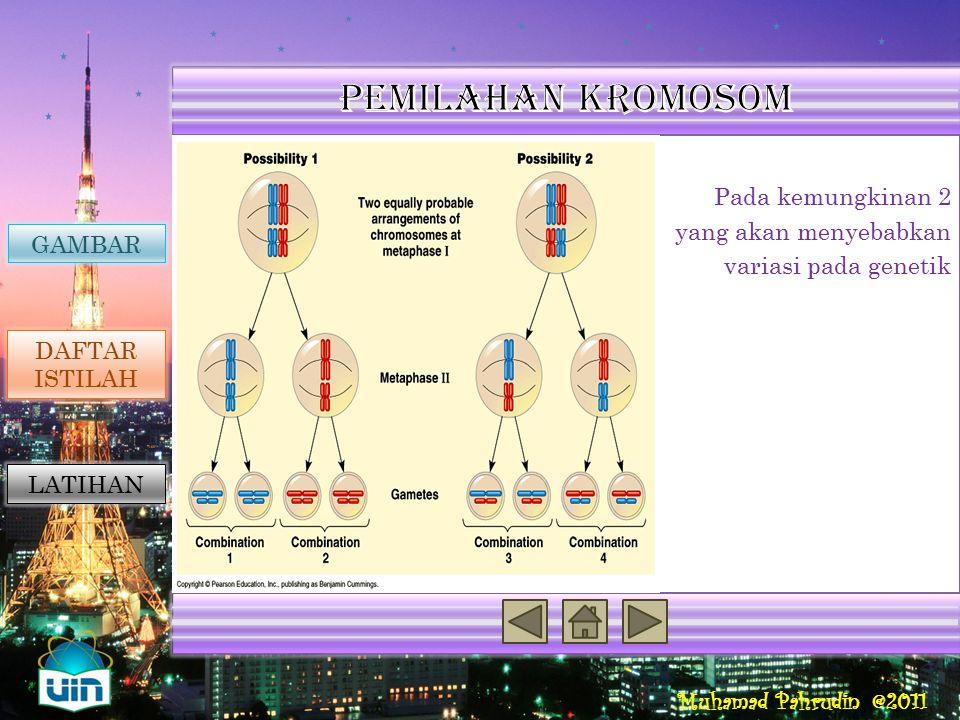 Reproduksi Seksual Penyebab Variasi Genetik