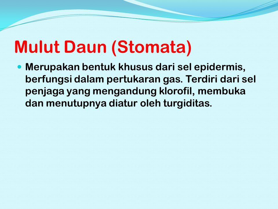 Mulut Daun (Stomata)