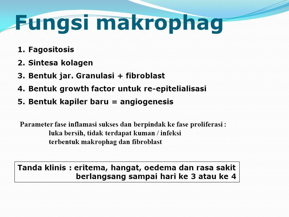 Fungsi makrophag Fagositosis Sintesa kolagen