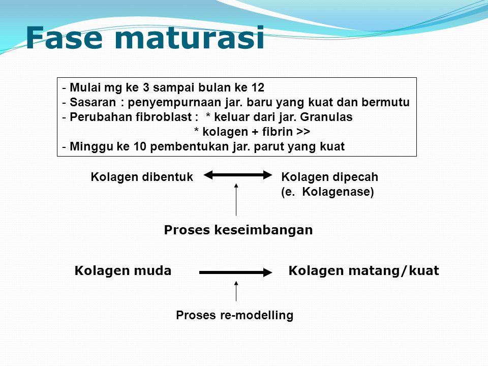 Fase maturasi Mulai mg ke 3 sampai bulan ke 12