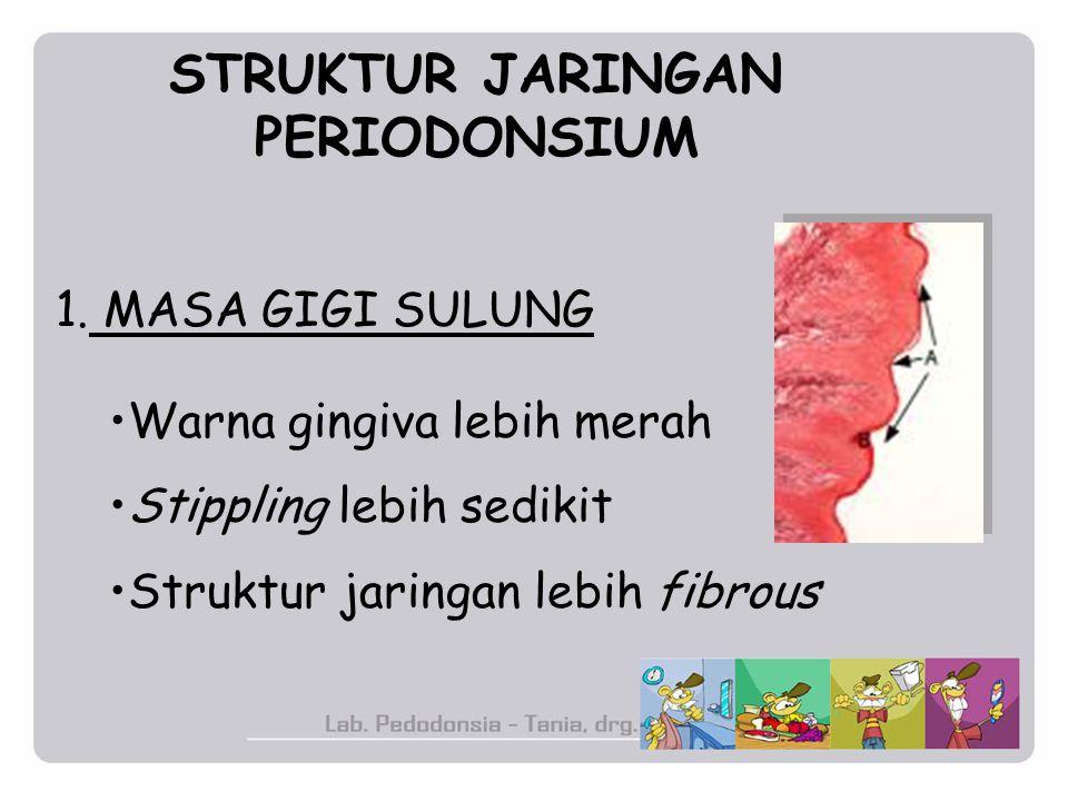 STRUKTUR JARINGAN PERIODONSIUM