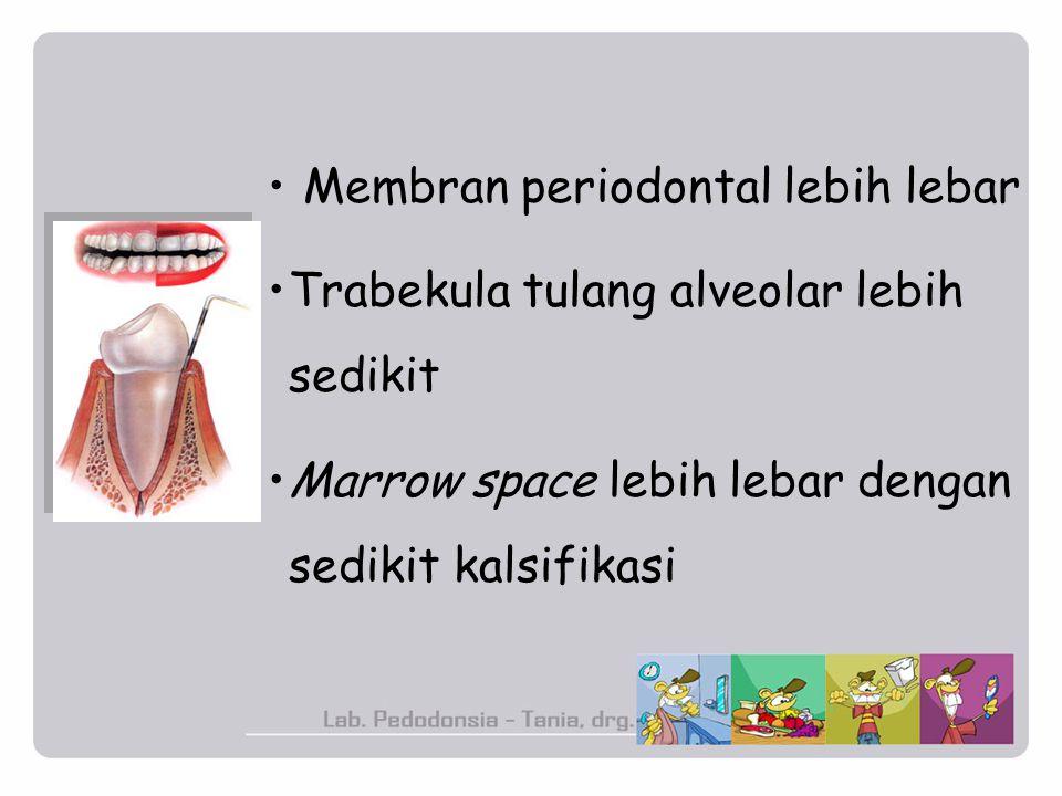 Membran periodontal lebih lebar
