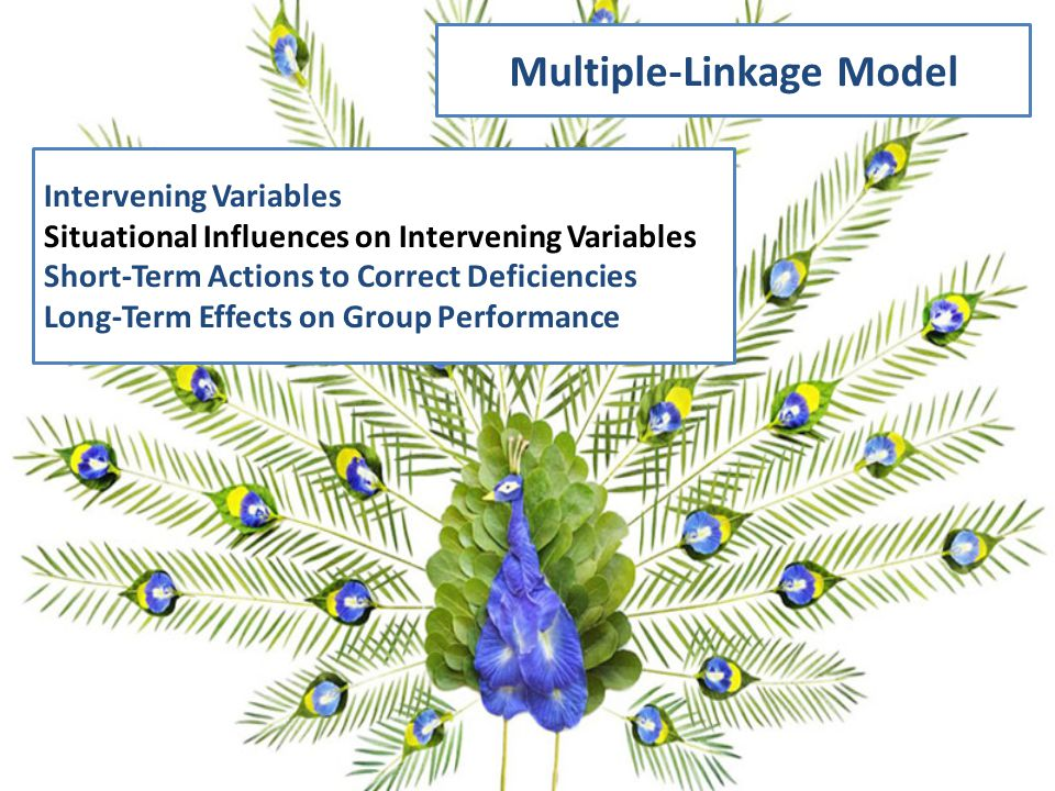 Multiple-Linkage Model