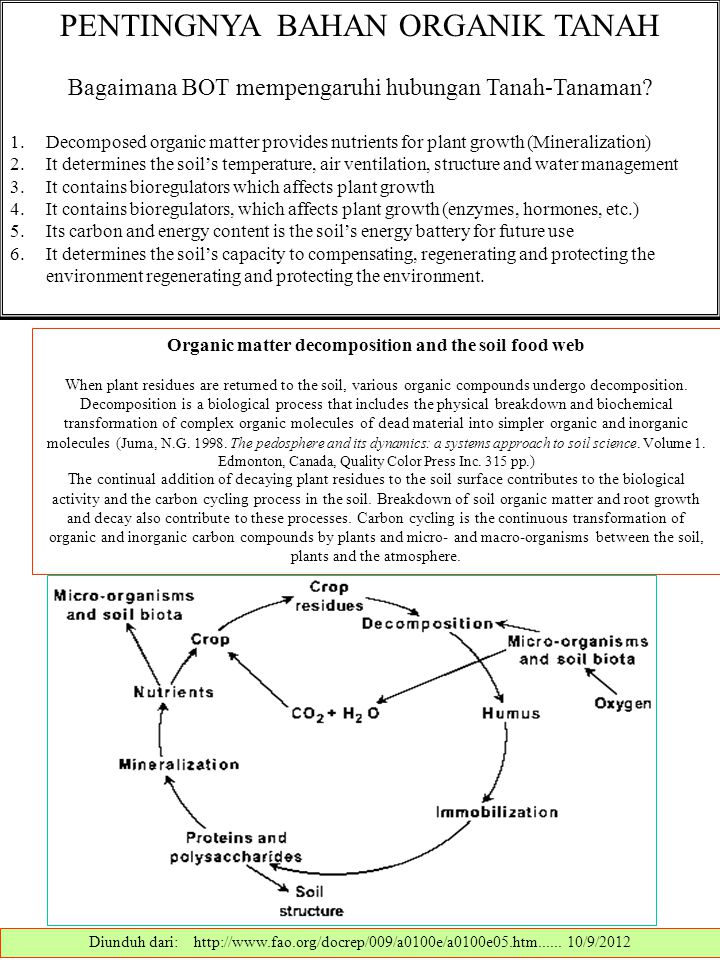 Organic matter decomposition and the soil food web