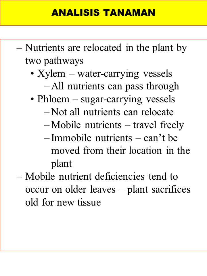 Nutrients are relocated in the plant by two pathways