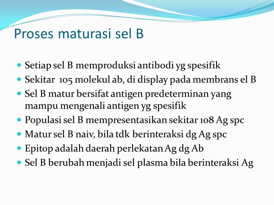 Proses maturasi sel B Setiap sel B memproduksi antibodi yg spesifik