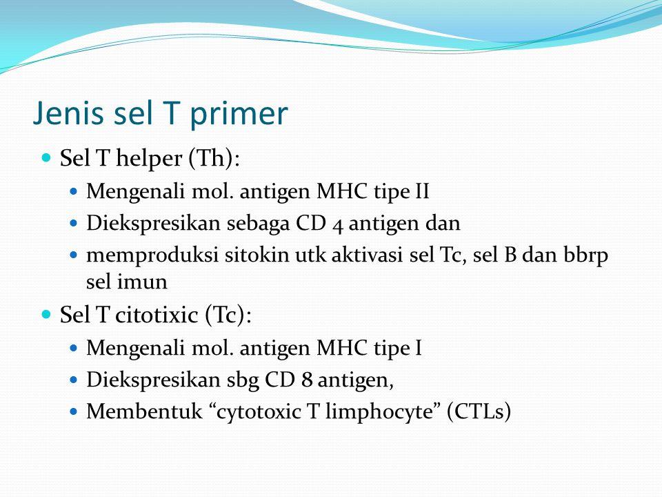 Jenis sel T primer Sel T helper (Th): Sel T citotixic (Tc):