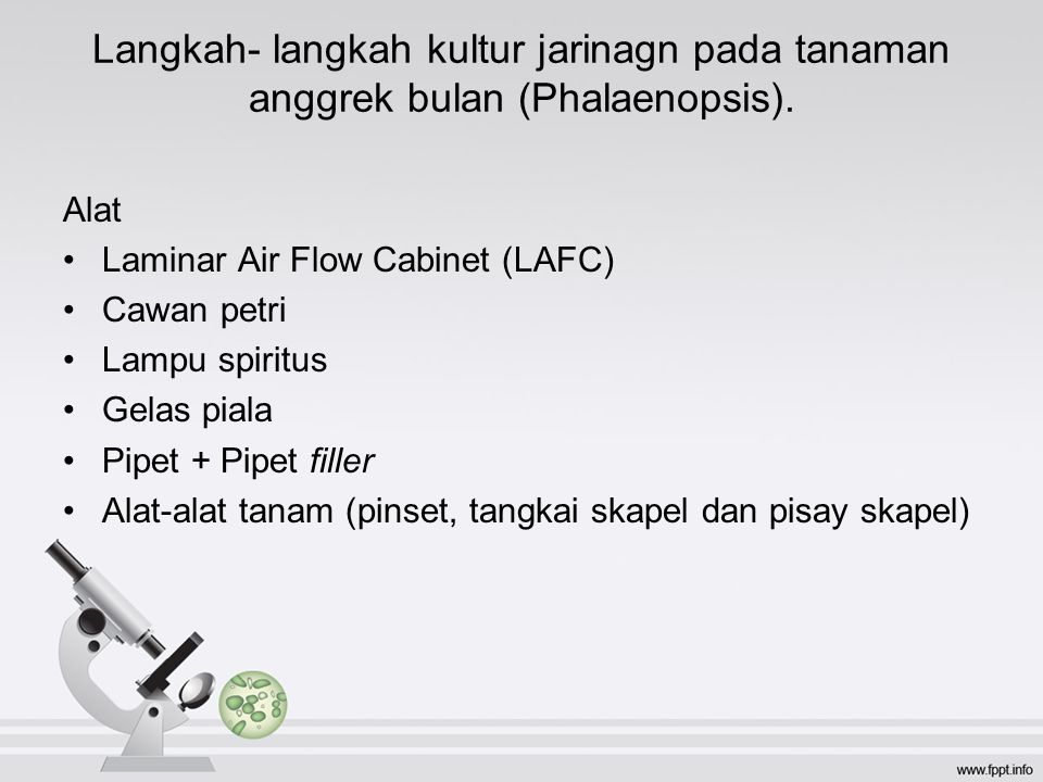 Langkah- langkah kultur jarinagn pada tanaman anggrek bulan (Phalaenopsis).