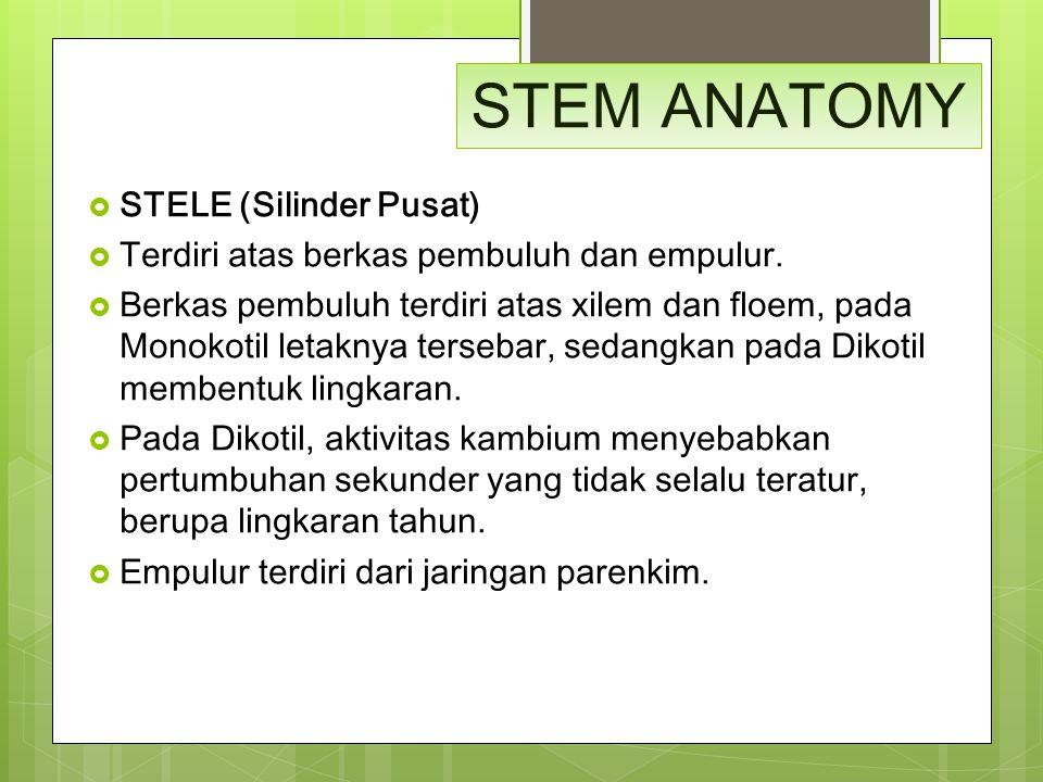 STEM ANATOMY STELE (Silinder Pusat)