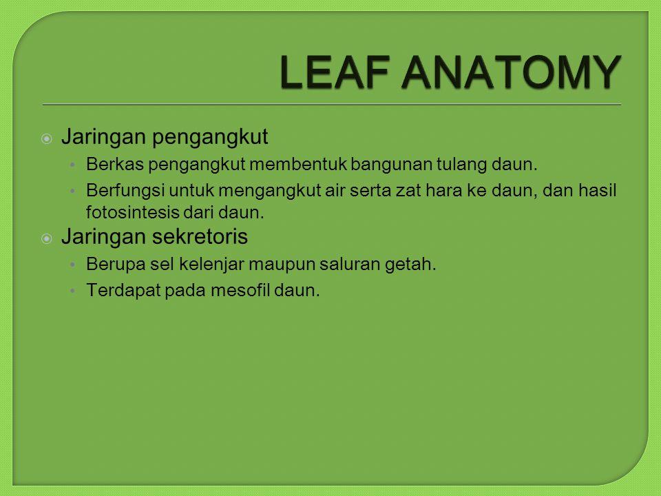 LEAF ANATOMY Jaringan pengangkut Jaringan sekretoris