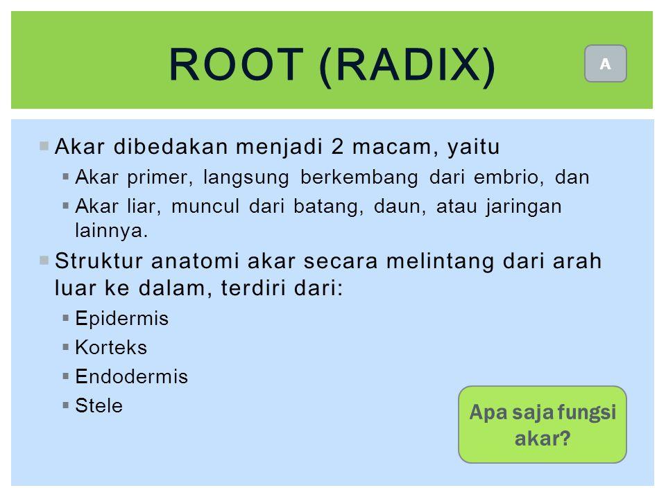 ROOT (radix) Akar dibedakan menjadi 2 macam, yaitu
