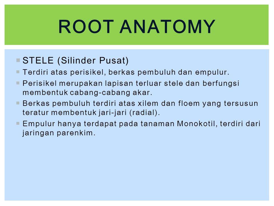 Root anatomy STELE (Silinder Pusat)
