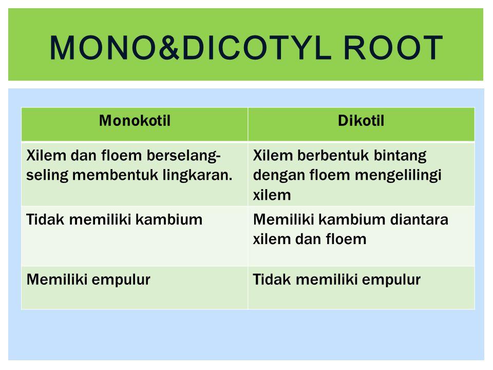 Mono&dicotyl root Monokotil Dikotil