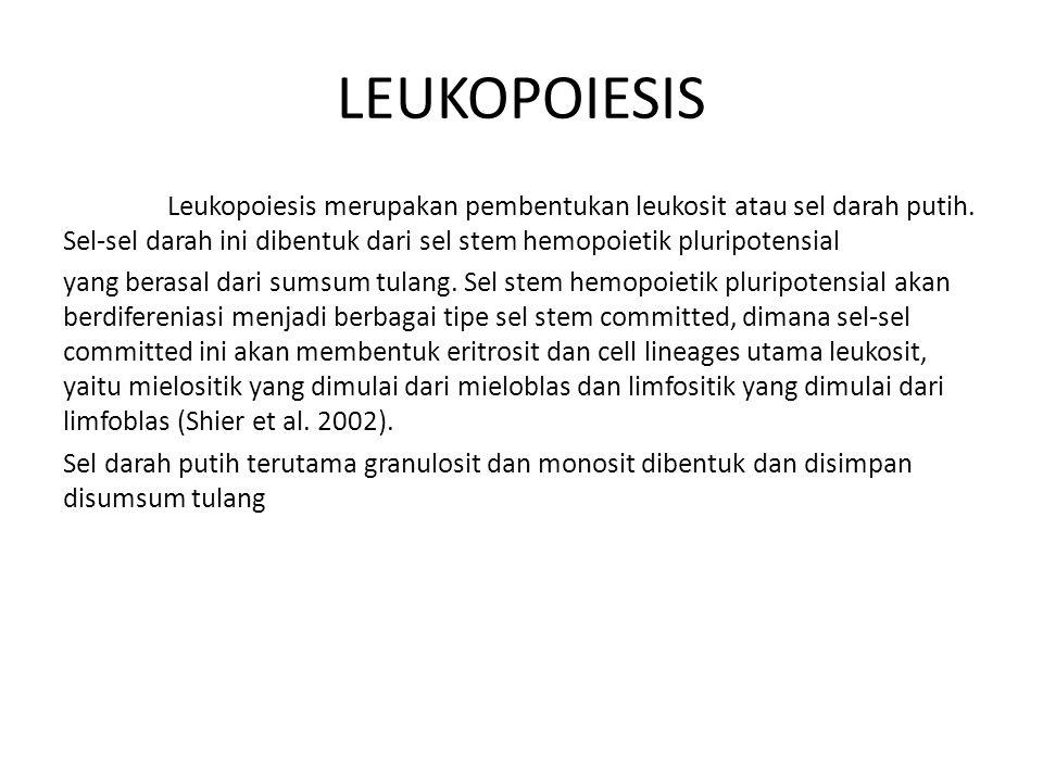 LEUKOPOIESIS Leukopoiesis merupakan pembentukan leukosit atau sel darah putih. Sel-sel darah ini dibentuk dari sel stem hemopoietik pluripotensial.