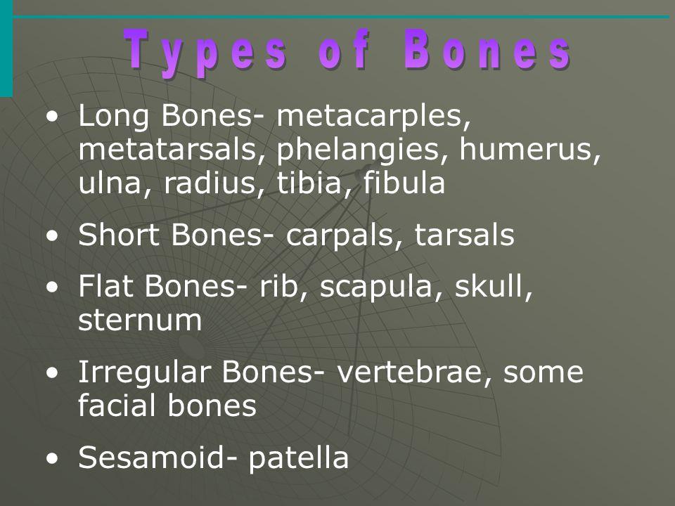 Short Bones- carpals, tarsals Flat Bones- rib, scapula, skull, sternum