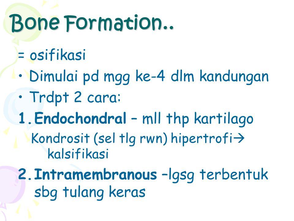 Bone Formation.. = osifikasi Dimulai pd mgg ke-4 dlm kandungan