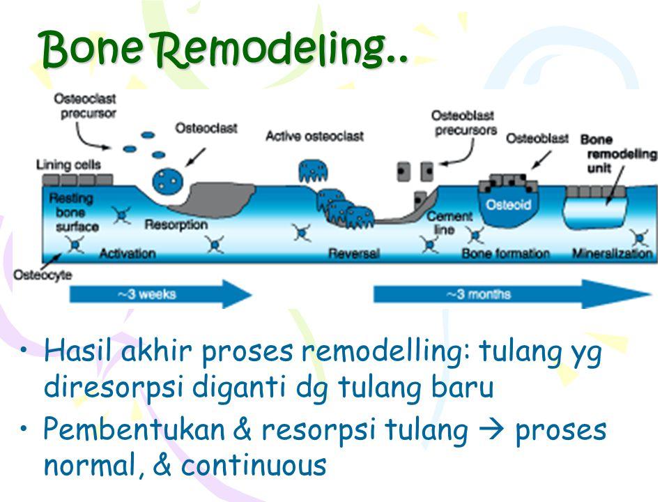 Bone Remodeling.. Hasil akhir proses remodelling: tulang yg diresorpsi diganti dg tulang baru.