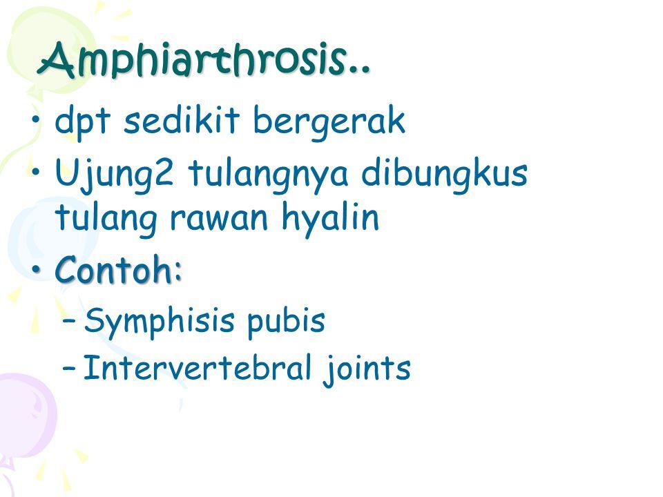 Amphiarthrosis.. dpt sedikit bergerak