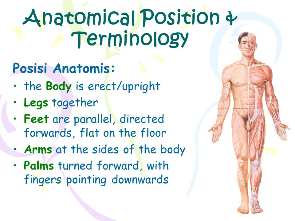 Anatomical Position & Terminology