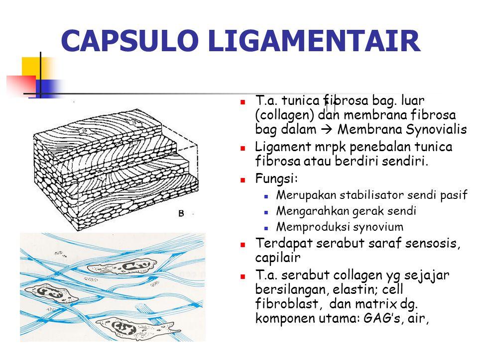 CAPSULO LIGAMENTAIR T.a. tunica fibrosa bag. luar (collagen) dan membrana fibrosa bag dalam  Membrana Synovialis.