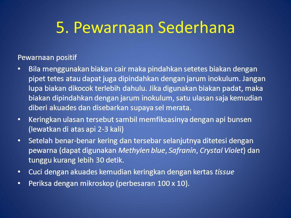 5. Pewarnaan Sederhana Pewarnaan positif