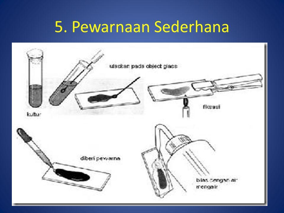 5. Pewarnaan Sederhana