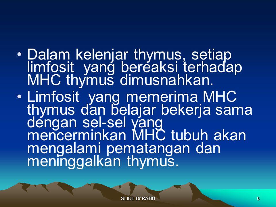 Dalam kelenjar thymus, setiap limfosit yang bereaksi terhadap MHC thymus dimusnahkan.