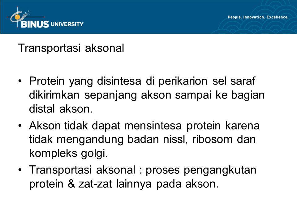 Transportasi aksonal Protein yang disintesa di perikarion sel saraf dikirimkan sepanjang akson sampai ke bagian distal akson.