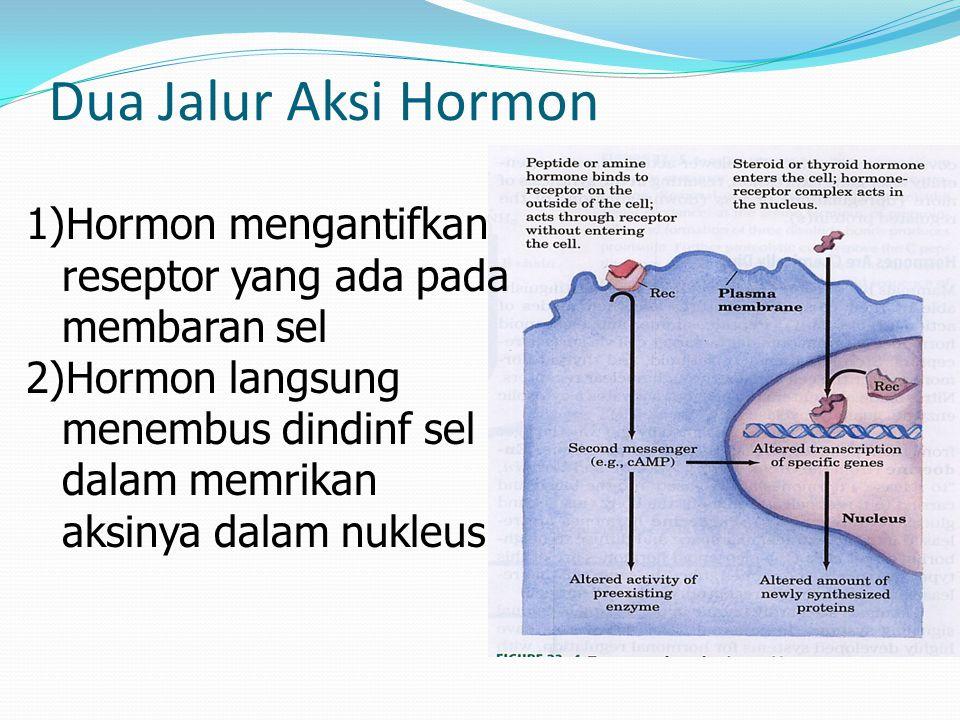 Dua Jalur Aksi Hormon Hormon mengantifkan reseptor yang ada pada membaran sel.