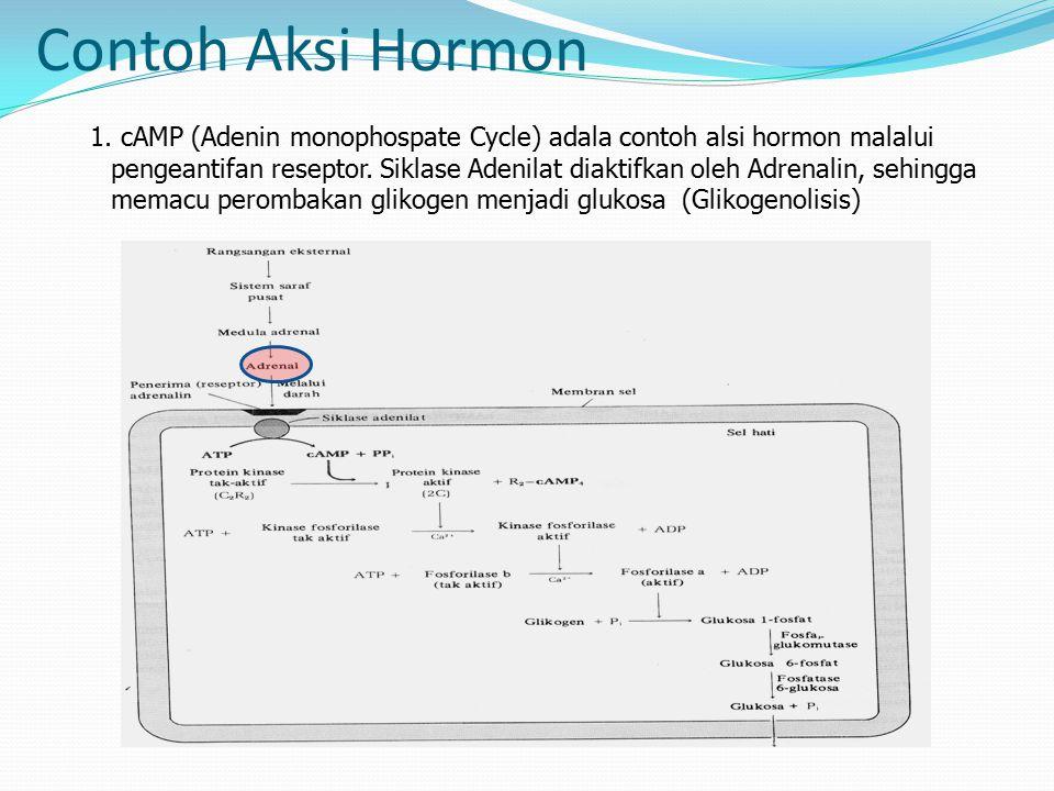 Contoh Aksi Hormon