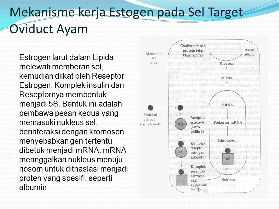 Mekanisme kerja Estogen pada Sel Target Oviduct Ayam